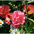 Roses en couleurs