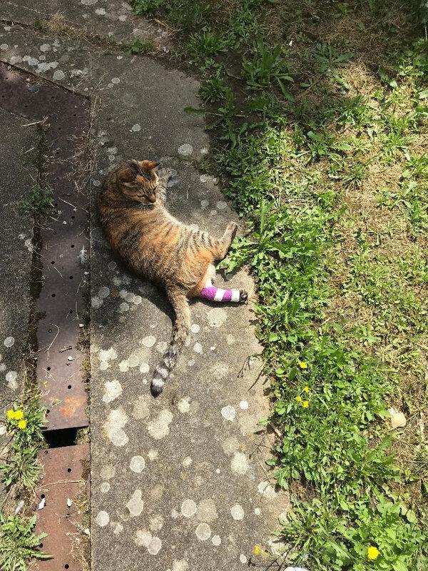 Noisette profite du soleil malgré sa blessure