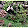Photos <b>ZOO</b> <b>PARC</b> DE <b>BEAUVAL</b> suite
