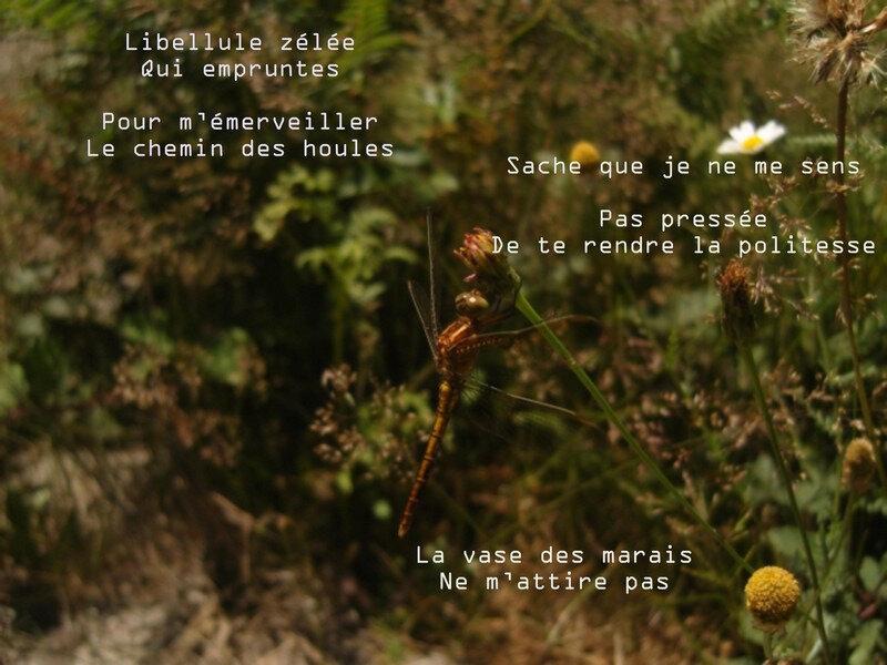 Image0038