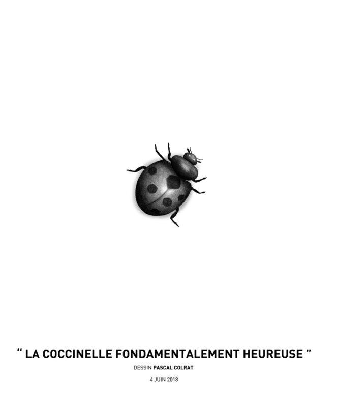 __la_coccinelle_fondamentalement_heureuse__
