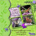 Les papillons - Jouvence