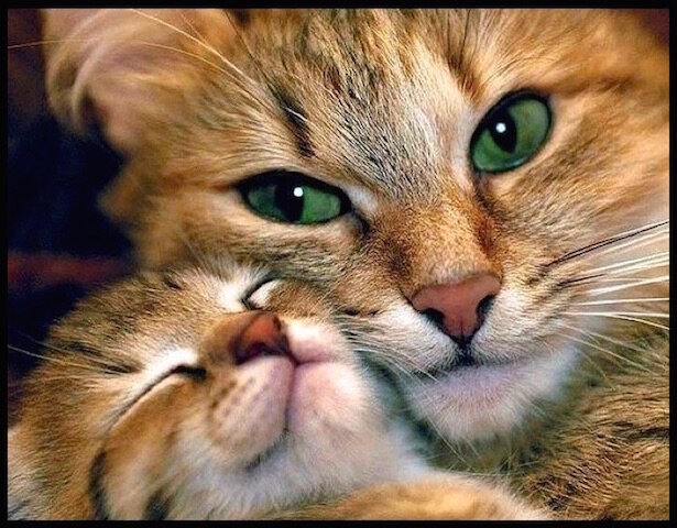 chats tendresse 1