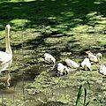 Liessies - le parc de l'abbaye