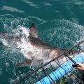 Shark attack 4
