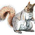Poésie d'automne: l'écureuil