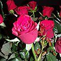 La vie en rose(s)