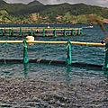 <b>Aquaculture</b>, Maurice, La Réunion, Requins