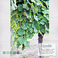 Le <b>vignoble</b> de Châtenois Alsace