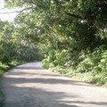 Route des chiapas