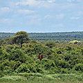 AFRIQUE SUD. Un éléphant.