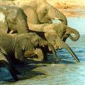 Piétinée à mort par les éléphants.