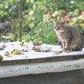 As- L'île aux chats Victorine Autier Amiens