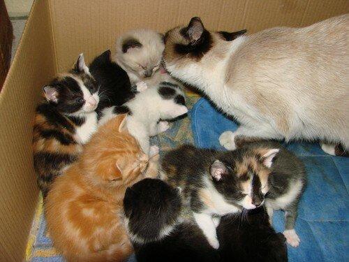 2008 04 07 Blanco et les 9 petits chatons