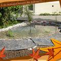 Jardin / étang suite...