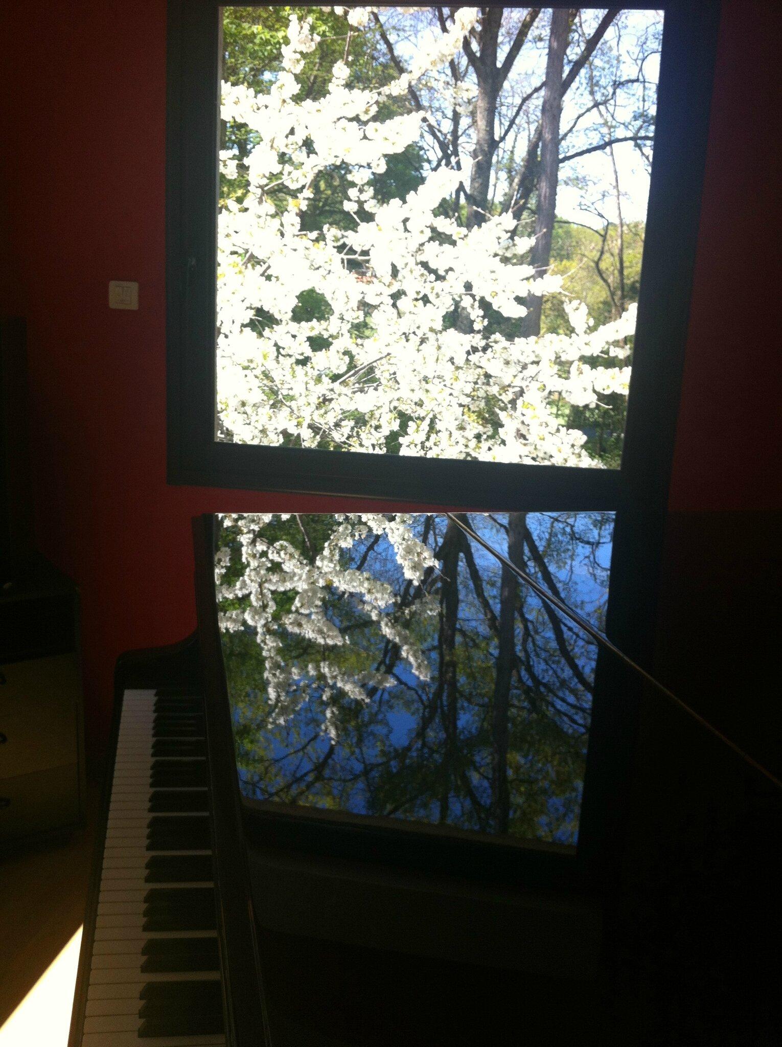 Reflets cerisier en fleurs sur le piano