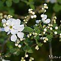 Esquisse blanche d'un printemps bien gris...