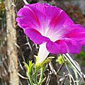 Fleurs et chat 2007