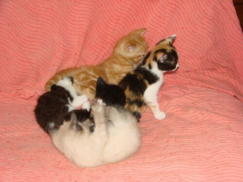 2008 04 17 Cinq petit chatons