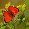 Butterfly (61)