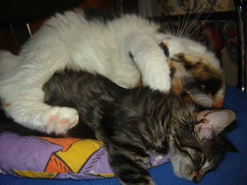 Asia et Koraille dorment ensemble 010