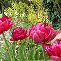 Valeurs sûres au jardin #1