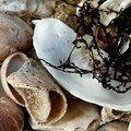 coquillages et crustacés I