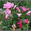 Prairie fleurie 11081515