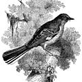 L'oiseau moqueur