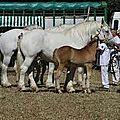 Le cheval boulonnais