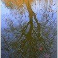 Reflet d'arbre