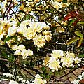 1-Roses et fleurs de Léon 290417