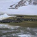 Des nouvelles de l'antarctique