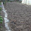 2008 04 29 Mon jardin