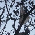 Ce qui pousse dans les arbres