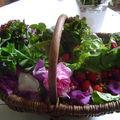 jeunes salades, pétales deroses et fraises