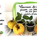 Comment faire pousser un pommier / poirier avec des pépins ? Tuto pas à pas astuce jardin facile