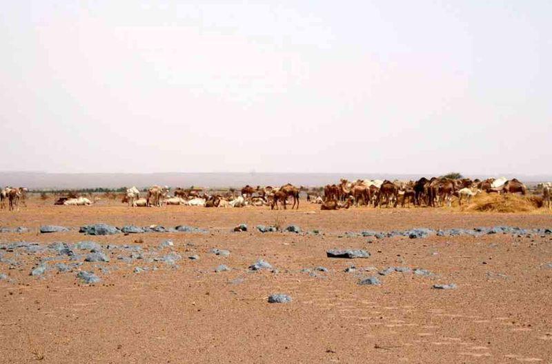 Seckasysteme-Mauritaniemauritania%202007%20095_jpg_rs