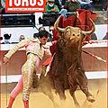 <b>TOROS</b> DE LA MI-OCTOBRE EST EN VENTE