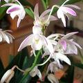 Cette orchidée m'a séduit avec son puissant parfum