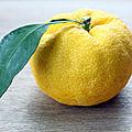 Le yuzu, un agrume particulier ! {idées pour tout utiliser, le cultiver, l'apprécier- produits à base de yuzu}