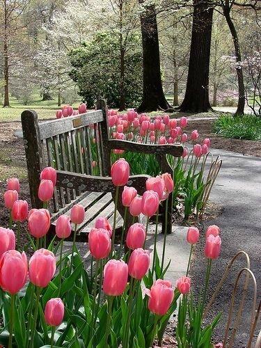 Le printemps est là...