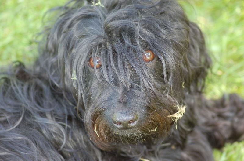 Hobby Dog 20-09-08 (1146)
