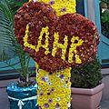 08/11/14 : <b>Chrysanthema</b> 2014