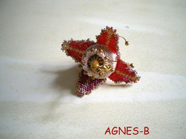52_agnesB