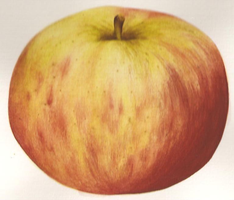 étude documentaire : pomme