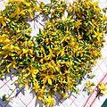 Millepertuis, la plante magique : recette et utilisation