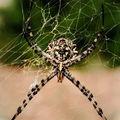 Araignée ... mais quel est ton nom ?