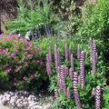 Le jardin de Sissinghurst Castle