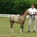 Monter a cheval vous donne un gout de liberté